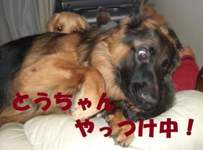 縺ィ縺・■繧・s繧・▲縺、縺台クュ_convert_20121217211000