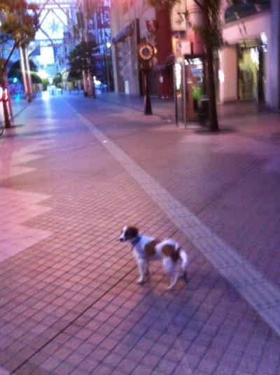 fc2blog_20121204124221d49.jpg