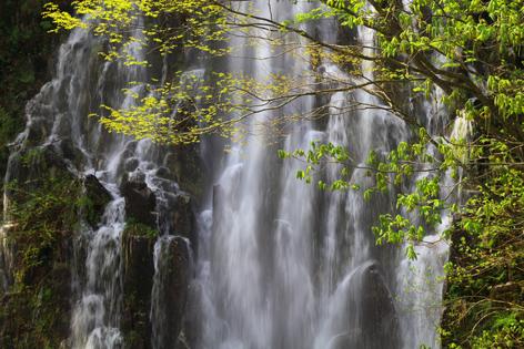 樽滝・若葉と飛沫
