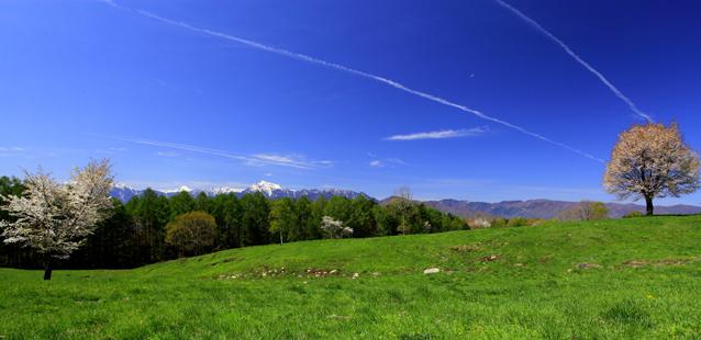 南アルプスに緑の草原と桜