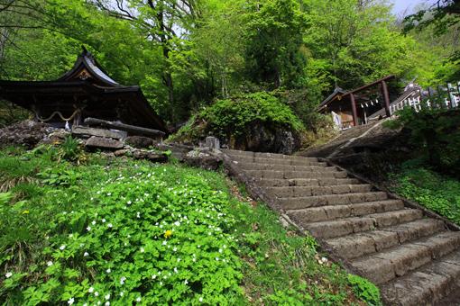 花咲く戸隠神社