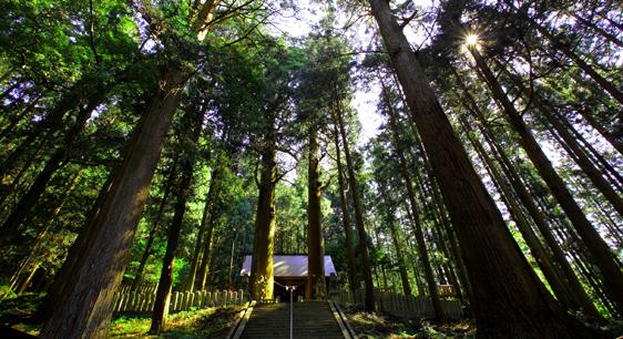 大杉と恵那神社