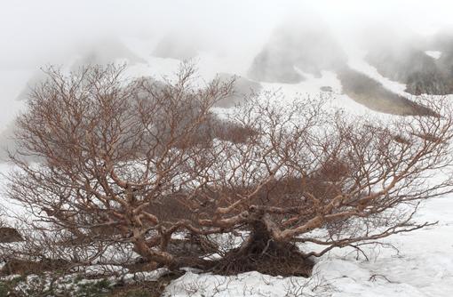 霧に霞む岳樺と岩峰
