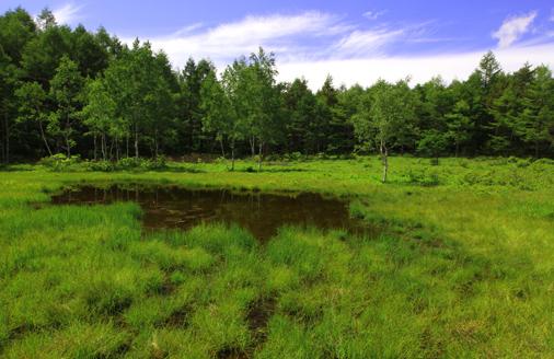 南方の湿原