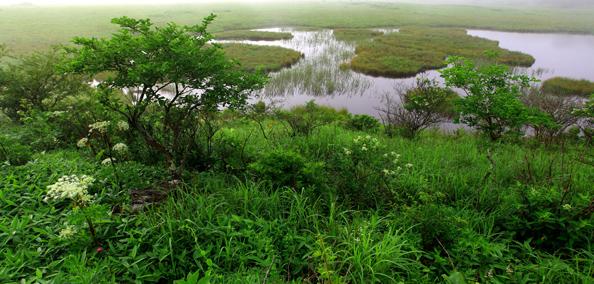 霧に霞む八島湿原