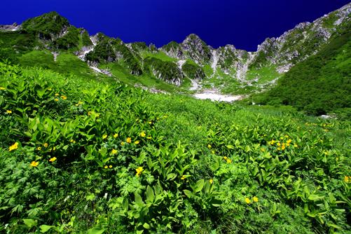 シナノキンバイ咲く千畳敷