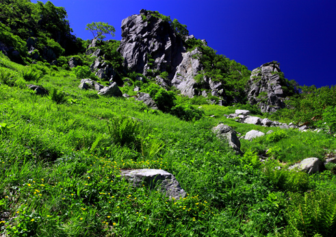 花崗岩峰を彩るお花畑