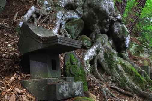 木の根と石神石仏