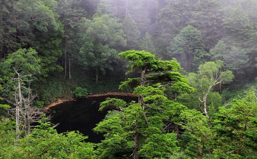 森に囲まれた小池