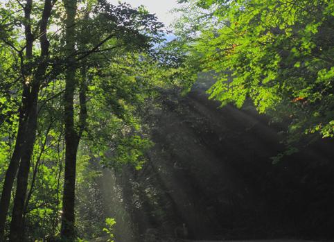 光のシャワーを浴びるアプローチの林道歩き