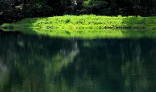 緑に映える池