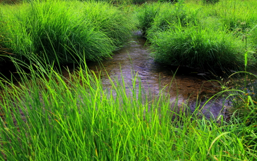 草原に流水