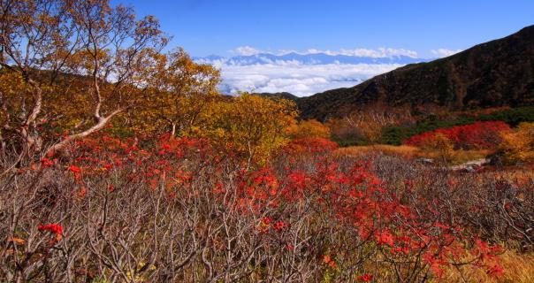 紅葉彩る雲海上の南アルプス