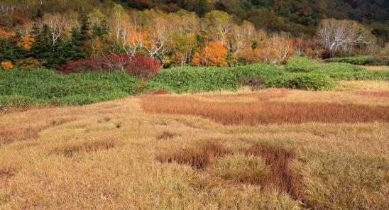 草原と紅葉の森