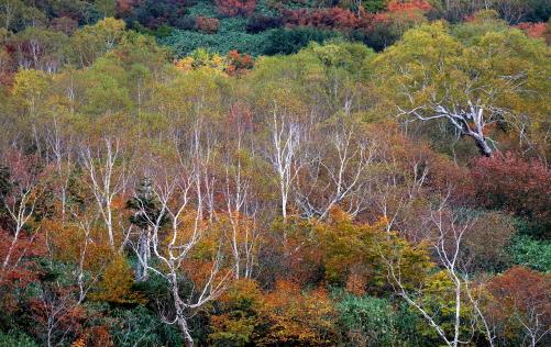 木々を彩る紅葉