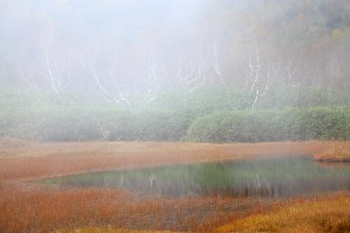 ガスまとう浮島湿原