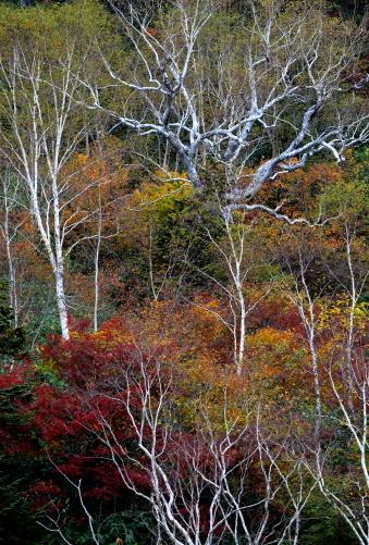 造形的な木々彩る