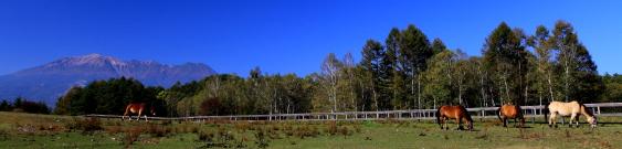 木曽駒の牧場