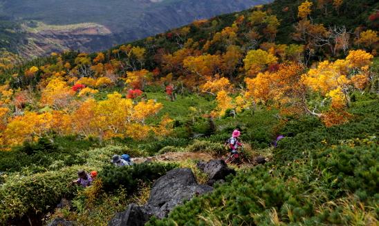 森林限界の紅葉帯を歩く登山者