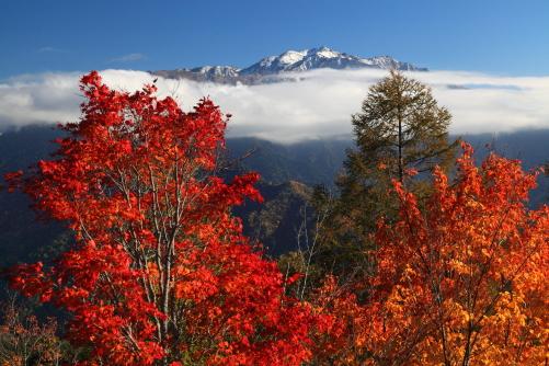 カエデと仙丈ヶ岳
