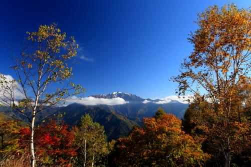 紅葉彩る新雪抱く仙丈ヶ岳
