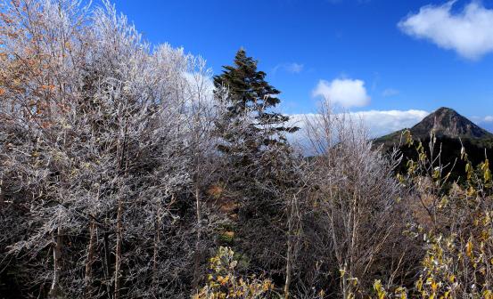 霧氷の花咲く木々と笠ヶ岳
