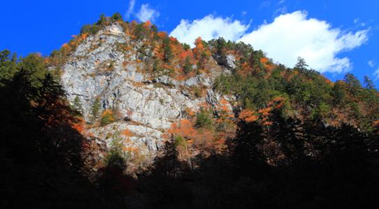 巫女岩の黄葉