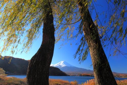 二本柳と富士山