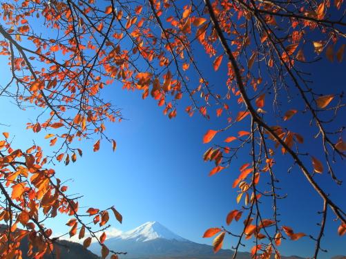 紅葉降り注ぐ霊峰富士