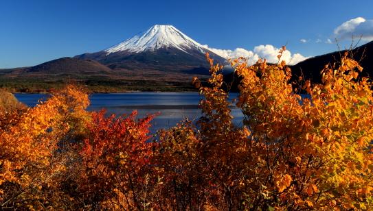 錦秋に映える富士山