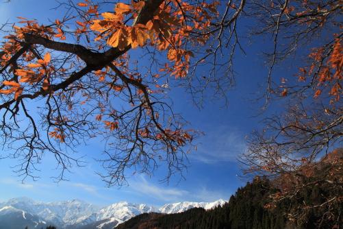 紅葉と白馬連峰