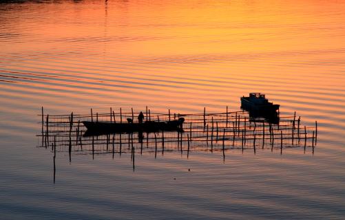 漁師の朝仕事