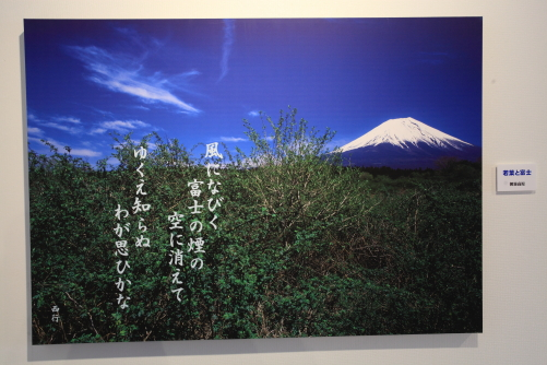 展示写真から「若葉と富士」