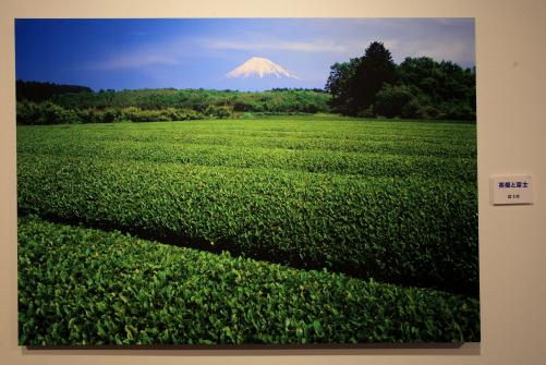 展示写真から「茶畑と富士」