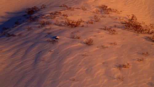 朝日に照らされたシュカブラとダケカンバの木立