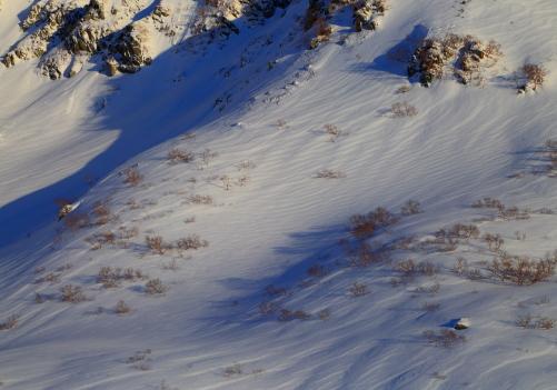雪原に映える樹影