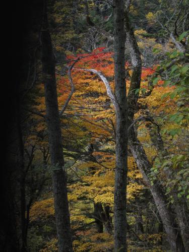 木々の間の紅葉