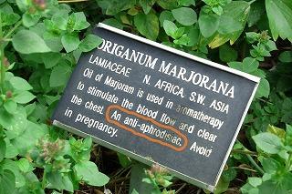 Marjoram 1