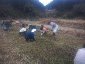 苗床草刈り