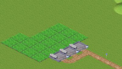 スパイス農場「ショウガ」