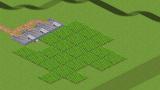 スパイス農場「トウガラシ」