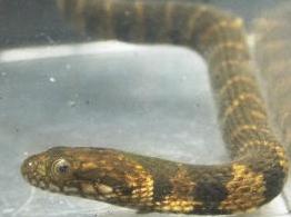 Snake2 (2)