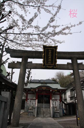 IMG_4068 桜