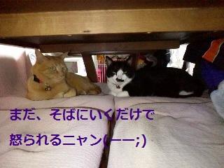 2012051121020001.jpg