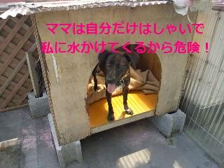 2012051413420003.jpg