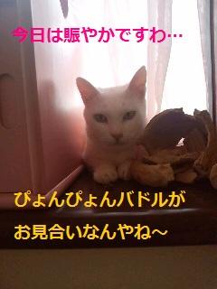 2012061720460000.jpg