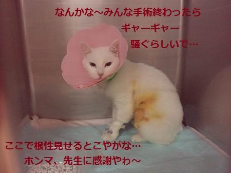 2012062519190000.jpg