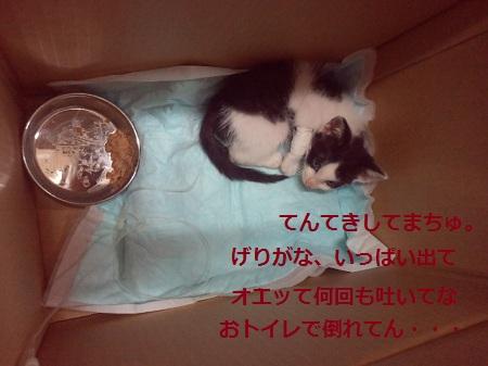 2012062519210000.jpg