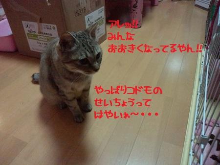 2012071023400000.jpg