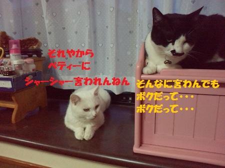 2012071719120000.jpg
